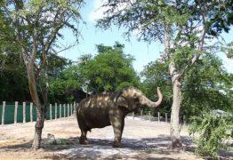 PMJP e Santuário dos Elefantes firmam pré-acordo sobre destino da elefanta Lady