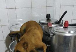 Filtro de cachorro 'brazuca' bomba no Instagram; veja como usar o efeito
