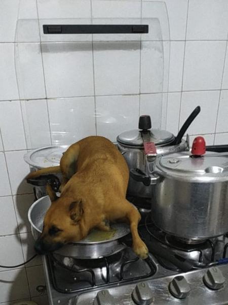 filtro de cachorro no instagram tem viralizado 1570656488887 v2 450x600 - Filtro de cachorro 'brazuca' bomba no Instagram; veja como usar o efeito