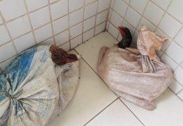 Homem suspeito de roubar galinhas, é baleado em Santa Rita