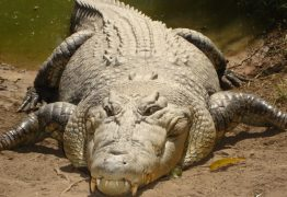 Após ser atacado, pescador arranca olho de crocodilo