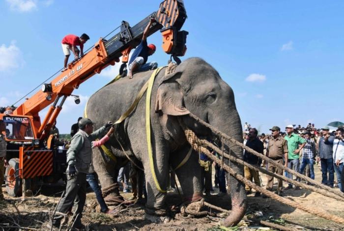 1 ele 14231240 - MORTAL: Elefante é capturado após matar cinco pessoas