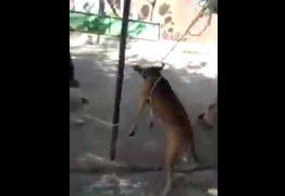 Vídeo mostra agressividade e maus-tratos durante resgate de animais de rua