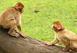 NÃO CUREM A HOMOSSEXUALIDADE: pelo menos 1.500 espécies animais já demonstraram 'comportamentos gays'