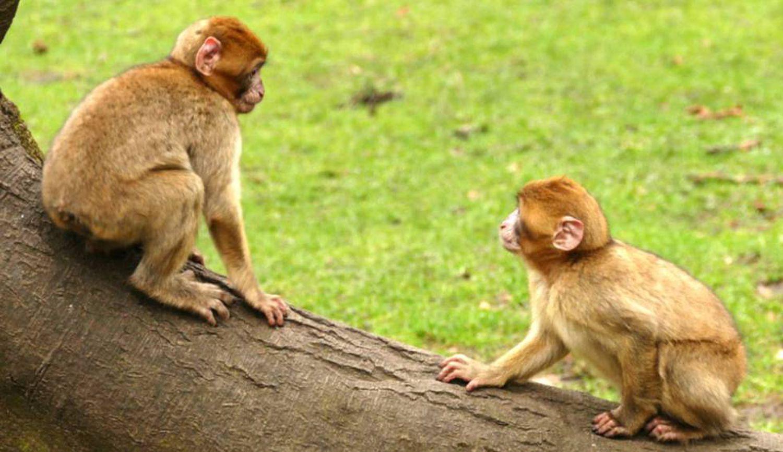comportamento homossexual - NÃO CUREM A HOMOSSEXUALIDADE: pelo menos 1.500 espécies animais já demonstraram 'comportamentos gays'