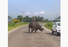 Rinoceronte invade rodovia e deixa motoristas em pânico – VEJA VÍDEO