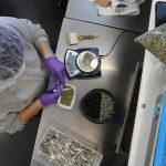 20out2016 yvonne varela faz a pesagem da cannabis no harborside um dispensario de maconha medicinal em oakland california 1477403564608 615x300 150x150 - Governo já gastou R$ 2,9 milhões com remédios à base de maconha medicinal