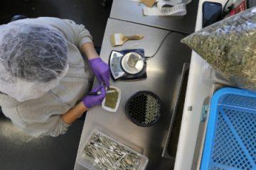 20out2016 yvonne varela faz a pesagem da cannabis no harborside um dispensario de maconha medicinal em oakland california 1477403564608 615x300 360x240 - Governo já gastou R$ 2,9 milhões com remédios à base de maconha medicinal