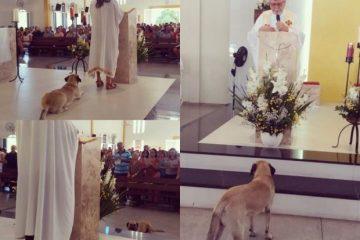 Cãozinho participa de missa na Capital e rouba a cena durante celebração