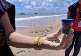 Prefeito de Cabedelo acusa catamarãs de 'limpar banheiros' na praia, mas UFPB esclarece que fezes são de tartarugas