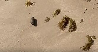 fezes - Prefeito faz vídeo para denunciar cocô em praia de Cabedelo, PB; 'não anda sem pisar em fezes'