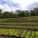 horta 150x150 - Agricultores de Sapé usam energia solar e economiza 95% na conta de luz