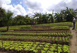 Agricultores de Sapé usam energia solar e economiza 95% na conta de luz