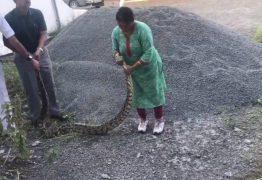 Mulher lidera resgate de píton de 20 kg e captura cobra com as próprias mãos – VEJA VÍDEO