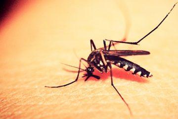 Paraíba tem quase 133 municípios em alerta de surto de doenças causadas pelo mosquito Aedes aegypti