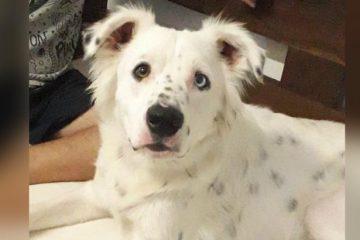 Cachorro surdo devolvido após ser adotado é acolhido por estudante também surdo