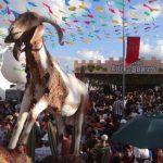images 3 3 150x150 - Lançamento da Festa do Bode Rei acontece neste sábado