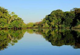 Menina de 4 anos é resgatada após ficar 5 dias na floresta no Pará
