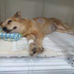 whatsapp image 2020 01 24 at 16.05.14 150x150 - Após morte do dono por câncer, cadela está com a mesma doença, em João Pessoa