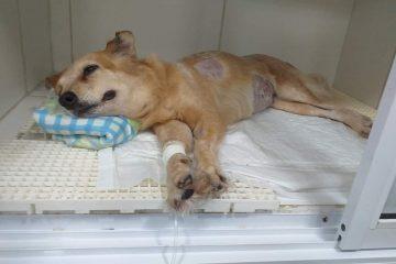whatsapp image 2020 01 24 at 16.05.14 360x240 - Após morte do dono por câncer, cadela está com a mesma doença, em João Pessoa