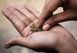 Por que maconha é proibida só para os pobres? – Por Denis Russo Burgierman