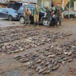 xblog rats.jpg.pagespeed.ic .MfNczkxSI4 150x150 - Cães caçam 730 ratazanas que infestavam fazenda