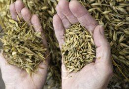3269089 487550 separating the wheat from the chaff 262x180 - CASA DE EPITÁCIO PESSOA: Não vão separar o joio do trigo? - Por Júnior Gurgel