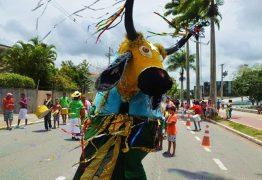 carnavaltradicaocg 262x180 - Confira programação dos blocos de pré-carnaval de Campina Grande neste domingo