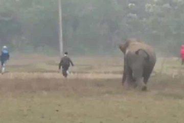 naom 5e208603e1487 360x240 - Homens são perseguidos por elefante após tentar tirar selfie com animal
