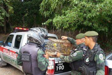 Diário Oficial publica alteração no comando de Batalhão da Polícia Ambiental