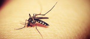 dengue 300x131 - Paraíba identifica dois sorotipos de dengue em circulação no Estado