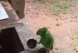 Vídeo de papagaio que toca e canta rende curtidas e alerta sobre tráfico – ASSISTA