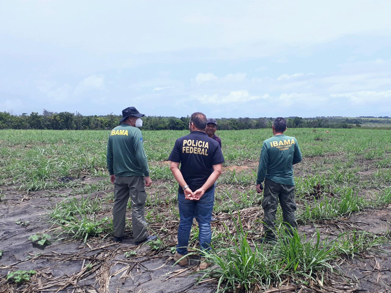 operacao ibama - Operação conjunta entre Polícia Federal e Ibama encontrou mais de 45 hectares de terras desmatadas na Paraíba