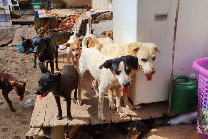 1 whatsapp image 2020 11 07 at 19 45 33  1  20439022 - Dona morre e cachorros comem corpo após uma semana sozinhos e sem alimento - VEJA VÍDEO