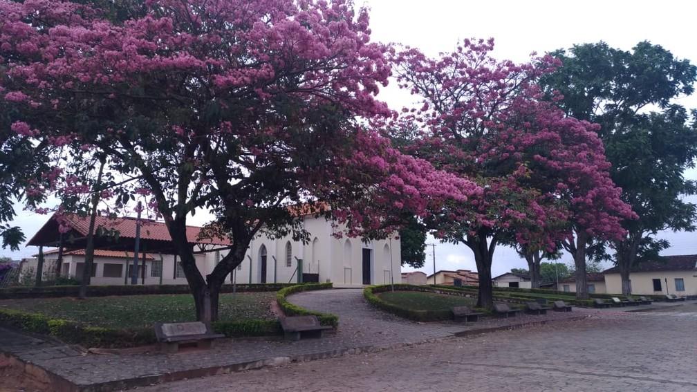 cedro do abaete - Apenas uma cidade do Brasil segue livre da Covid-19 - SAIBA QUAL