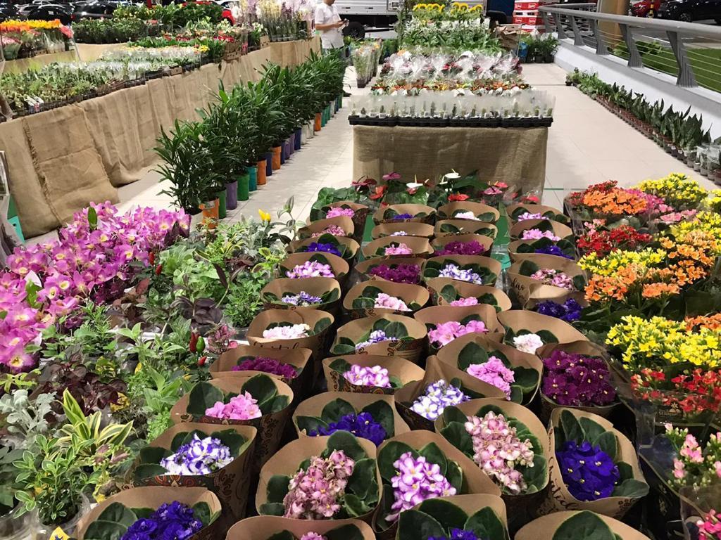 WhatsApp Image 2020 12 03 at 09.58.22 - Ferreira Costa promove Feira de Flores de Holambra a partir desta quinta-feira (03) - CONFIRA