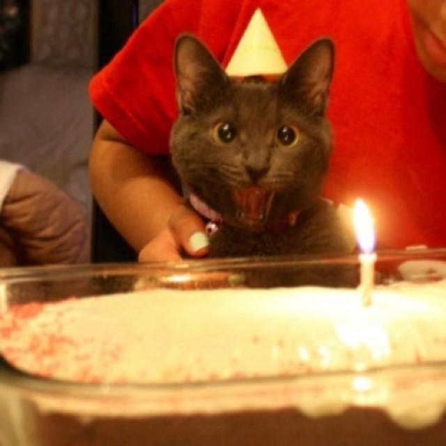 28175537968001 - Festa para comemorar aniversário de gato provoca surto de Covid-19