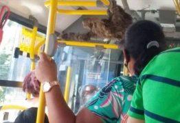 Bicho-preguiça 'passeia' de ônibus após ser resgatado por cobrador
