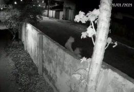 Polícia Civil localiza mulher que arremessou gato em casa com pitbull, em João Pessoa