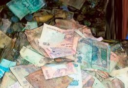 Cupins comem todo o dinheiro guardado por fazendeiro durante a vida
