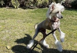 Cadela de CR7 e de Georgina provoca reações na internet: 'Por que uma cadela tão feia?'
