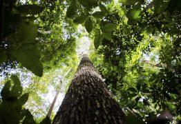 """44ebc0c8 ea7a 498f a798 159b1570d078 262x180 - E no """"tocante"""" à questão ambiental - Por Rui Leitão"""