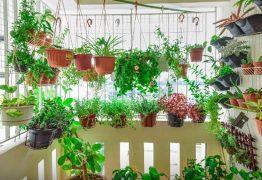 TERAPIA E ALÍVIO: Pandemia e isolamento aumentam procura por cultivo de plantas em casa, conheça as melhores espécies para o seu lar