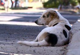 CRUELDADE: Polícia Civil investiga envenenamento de cães e gatos em Cabaceiras para identificar responsável pelo crime
