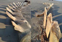 MISTÉRIO! Esqueleto gigante desenterrado em praia some misteriosamente