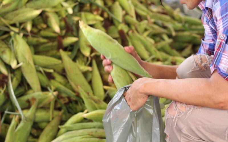 WhatsApp Image 2021 06 17 at 10.25.08 PM 1 800x500 1 - Prefeitura de Conde entrega 18 toneladas de milho a pessoas em vulnerabilidade social