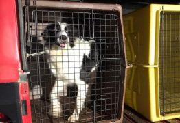 Cadela que atuou nas buscas em Brumadinho é enviada para ajudar a encontrar Lázaro Barbosa