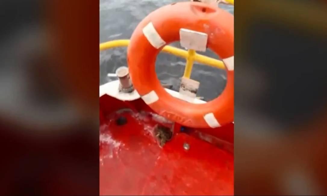 """xa.jpg.pagespeed.ic .RQ8j0ejp6q - """"FENÔMENO RARO"""": Baleia jubarte atinge barco e pescadores são resgatados na Baía de Guanabara - VEJA VÍDEO"""