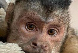 Macaco que tinha 17 milhões de seguidores morre ao ir a veterinário tratar os dentes