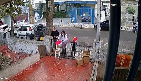 CADELA - GESTO DE CARINHO! Cadela que teve roupa furtada no portão de casa recebe novo casaco - VEJA VÍDEO